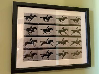 Horse Racing Negative