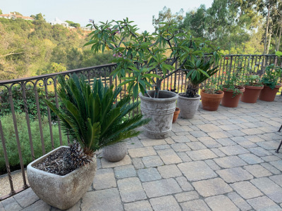 Assorted Potted Plants